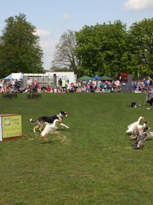 Dog and Duck Show